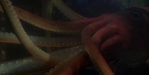 caribe 18 calamar gigante por ti.