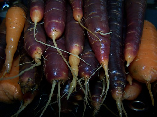 Carrots piled up ready for freezing