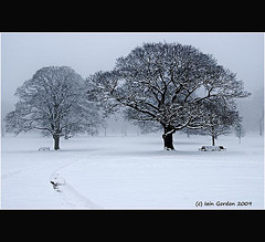 Misty Winter Scene - Camperdown Park - Dundee - Scotland (Magdalen Green Photography) Tags: trees winter mist snow nature landscape scotland cool pretty dundee scottish benches tayside winterscene camperdownpark calmnaturescene iaingordon scottishwinterscene mistywinterscene picturesofdundee dundeephotography imagesofdundee dundeestockphotography printsofdundee