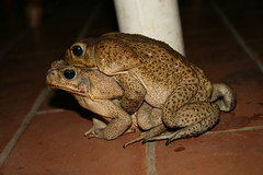 "A Pair Of Toads Having ""Special Cuddles"""