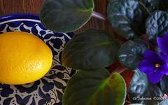 (tvordj) Tags: flowers stilllife food yellow pfosilver