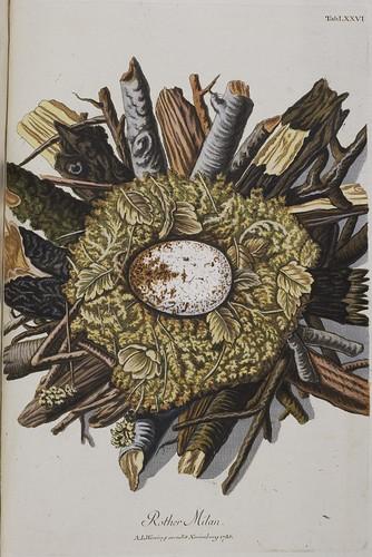 Sammlung von Nestern.. (1772-1786) a