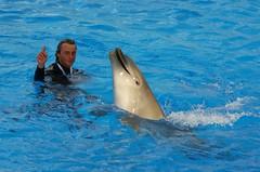 Déplacement-----Mediterraneo Marine Park --- Malta (CaptiveDolphins-vs-WildDolphins) Tags: malta dolphins shame delphinarium malte mediteraneo maltagozo marinelands mediterraneomarinepark captivedolphins themediteranneomarineparkinmaltaisashame unehonte unaverguenza dauphinscaptifs themediteranneomarineparkinsliemathemediteranneomarineparkinmalta themediteranneomarinepark dauphinsdelfines delfinescautivos