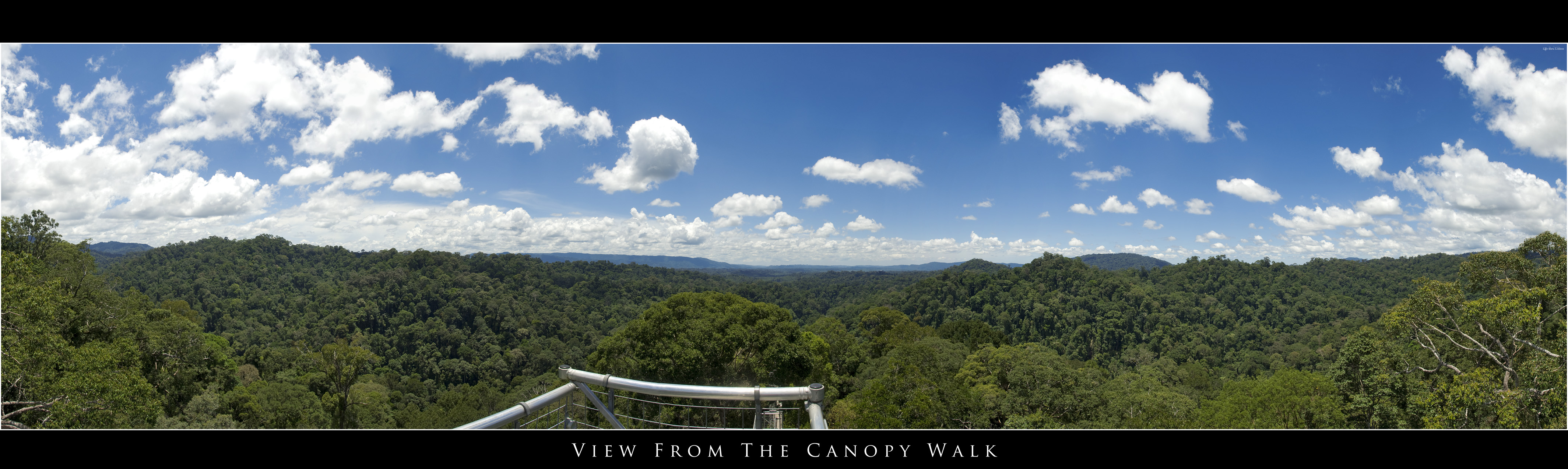 Canopy Walk Panorama