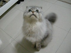 DSCN1032 (jacky elin) Tags: home cat play 貓 jammy 200903
