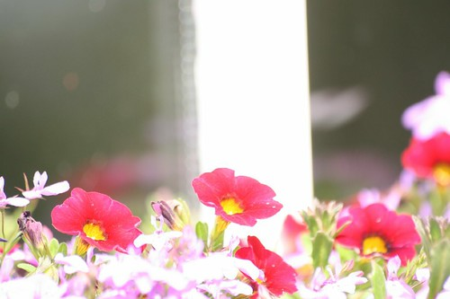 Window Box Bokeh