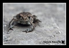 Day 32: Don't look @ me ! (Najwa Marafie - Free Photographer) Tags: vacation me look day sweden location frog dont grad 2009 32 najwa frogy marafie malmsjo grodinge