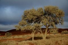 Africa - Namibia / Sossusvlei (RURO photography) Tags:           namib naukluft park dune45 dune7 sanddunes deadvlei desert landscape orange blue namibsky paysage ciel nuage sandcurves sunrise landschaft paesaggio paisagem paisaje vivid color colours colores afrika africa lafric african africain namib namibi namibia sanddne der namib travel reis reizen voyage photos photography kartpostal enstantane rudiroels globalbackpackers lonelyplanet discoveryphoto discoverychannel discoveryexpeditions anawesomeshot voyageursdumonde nationalgeographic fun supershot inspiredelite journalistchronicles tourism tourist woestijn kleuren kleurenpracht loszand