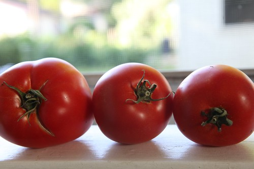 Tomatoes In My Window Sill