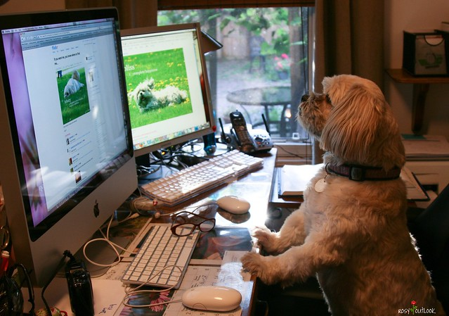 dog using a computer flickr