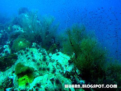 ปะการังดำ , กองหินชุมพร