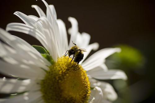 i am the pollinator