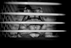 sguardo di un carcerato (the_Green_Ray) Tags: sguardo gabbia criceto cattivo