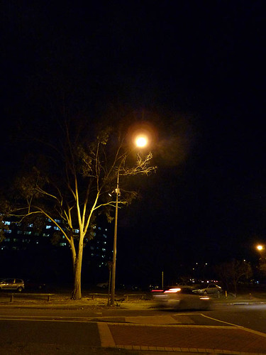 Tree, street light, night. 52/365