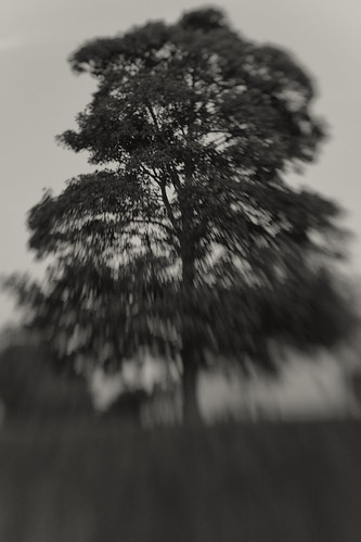 Tree By Fort Brockhurst Moat. Lensbaby Composer, Double Glass Optic, f2.8
