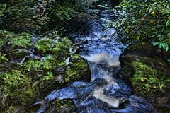 Westquater Burn - 13798 (NH_Snap) Tags: river scotland waterfall stream wasserfall bach burn falkirk stirlingshire westquaterburn westwuater nhsnap