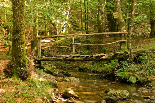 El Puente de madera 3980478383_1931b2ab72