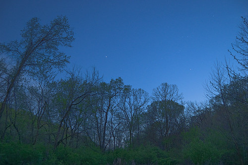 Forest 44 Conservation Area, near Valley Park, Missouri, USA - trees at dusk with constellation Orion