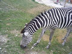 S4026225 (pappgabor) Tags: zoo veszprém 2007