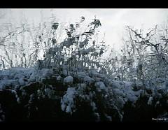 Boules-de-neige...!!! (Denis Collette...!!!) Tags: wild snow canada reflection reflections river photo quebec photos rivire safari reflet qubec rivers walden neige impressions collette reflets photosafari impression impressionist denis sauvages thoreau sauvage impressionists rivires portneuf wildrivers wildriver impressionistes impressionniste boulesdeneige deniscollette pontrouge riviresauvage riviressauvages photossafari guelderroses
