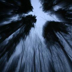 giants (-Antoine-) Tags: park blue trees winter sky motion blur tree nature forest giant square movement blurry zoom hiver bleu ciel arbres invierno giants foret arbre parc saguenay forêt flou geant mouvement chicoutimi boreal carré taiga boreale boréale boréal zoomburst taïga hivernal rosairegauthier géants z00m saguenaylacstjean saguenaylacsaintjean rosairegaut0142 z00mburst ©antoinerouleau