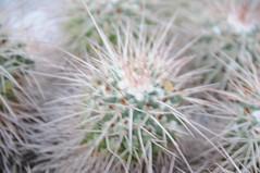 botanico 114 (blum1) Tags: cactus botanico ortobotanico