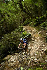 Forest River (Lindsay Froggatt) Tags: newzealand fern bike forest river mountainbike cycle nz mtb wakamarina