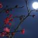 月明かりの梅花