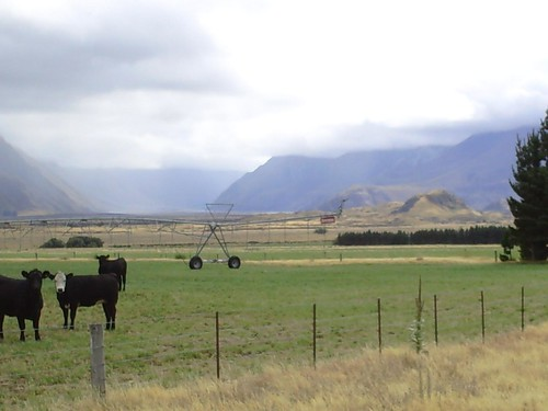 Cows and a Pivot in the foreground, Mt Sunday (Edoras) in the background
