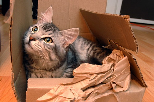 kitten_box_cardboard_play_cat