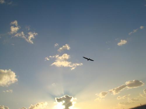 gökyüzünde martı
