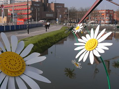 morning walk through Rotterdam