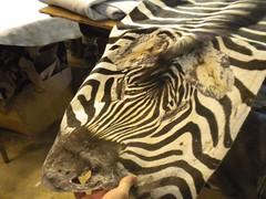 Tannery Tour zebra skin
