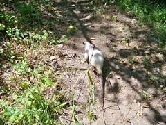 Muddy anteater