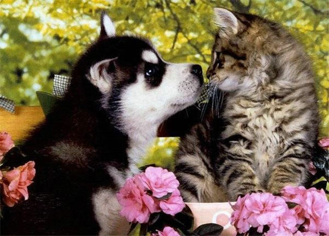 cats&dogs_17