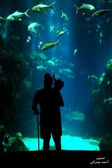 Explore (inspiration !) Tags: blue shadow orange fish man black kuwait q8 quarium