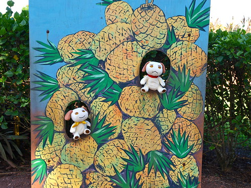 Pups @ Dole Plantation