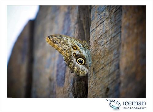 London Zoo 040