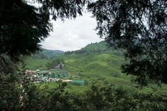 Framed (QooL /   ) Tags: travel landscape tea hills malaysia plantation cameronhighlands pahang qool sgpalas qoolens