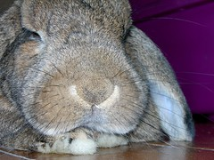 Sunny, yesterday my life was filled with rain. Sunny, you smiled at me and really eased the pain. The dark days are gone, and the bright days are here, My sunny one shines so sincere. (unaerica) Tags: italy hairy pet pets cute rabbit bunny bunnies nature beauty animals closeup fur outdoors nikon friend funny italia friendship princess sweet adorable fluffy happiness sunny ears plush moustache occhi curious animali lapin tenderness mypet coniglio cuccioli kanin coniglietto lopears orecchie unaerica pipola coniglietta coniglietti
