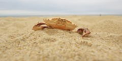 Crab reconstruction (Marcin Tustin) Tags: sun man beach nature sand action shell crab yoyo claws