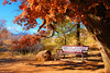 The autumn of life ... bench to sit down and take a break on (Beverly & Pack) Tags: pictures life road park blue autumn red sky dog tree green fall feet nature beautiful beauty up leaves yellow colo bench season relax photography stand big log chair colorado skies break shadows seasons place image photos path walk seat under scenic peaceful it spot hike falling dirt trail shade fallen sit coloradosprings co rest resting sat relaxation timeout fell breather settle bearcreek putyourfeetup sitdown takeabreak takeiteasy takeaseat havearest