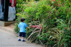 IMG_8019 (dantasdesign) Tags: brazil brasil sãopaulo zoológico paulo são cidades sopaulo zoolgico