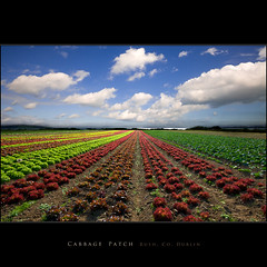 Cabbage Patch, Rush, Co. Dublin (Tony Murphy) Tags: dublin vanishingpoint rush cabbage singlepointperspective