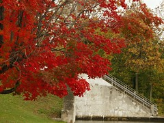 Day 269 - Autumn on the Rideau Canal system (Sharon's Shotz) Tags: autumn trees red ontario canada green fall water leaves yellow stairs steps unesco rideaucanal kingstonmills cans2s 2009yip rideaucanalwaterwaysystem