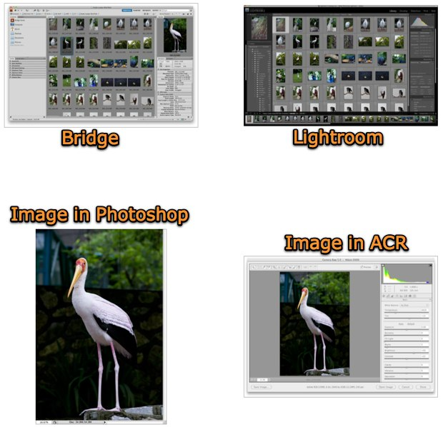 Adobe Photoshop plus Adobe Bridge vs Adobe Lightroom