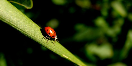 """Lady Bug in the Blackhills SD • <a style=""""font-size:0.8em;"""" href=""""http://www.flickr.com/photos/20810644@N05/4003136601/"""" target=""""_blank"""">View on Flickr</a>"""