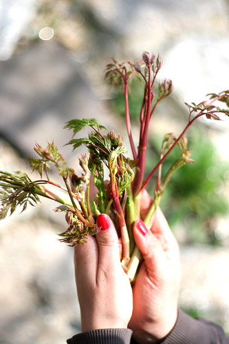 Bouquet d'asparagi