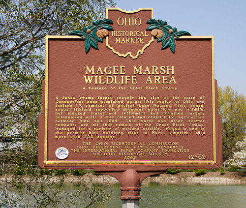 Magee Marsh, Ohio wildlife refuge-7
