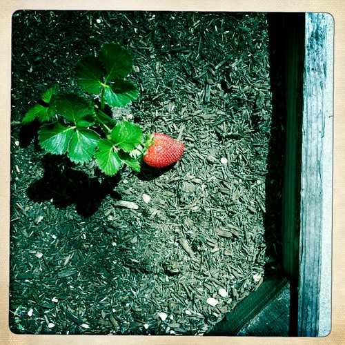 gardening on hipstamatic